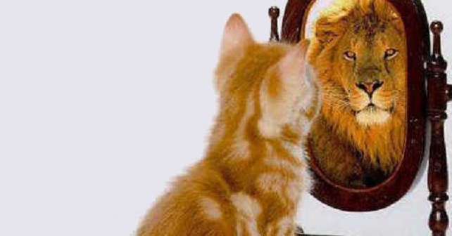 Gato-león-espejo
